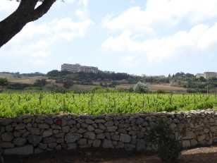 Grape fields around Hemsia Malta