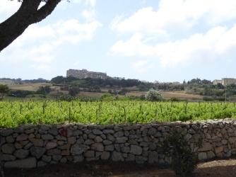Grape fields around Hemsia Malta